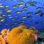 Anemone and Surgeonfish