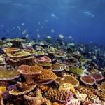 Irai Hard Coral Garden