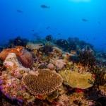 West Irai Reef