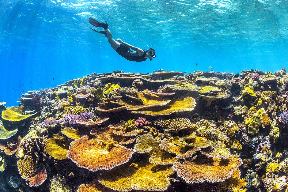 Reef Snorkeling Adventure Tour