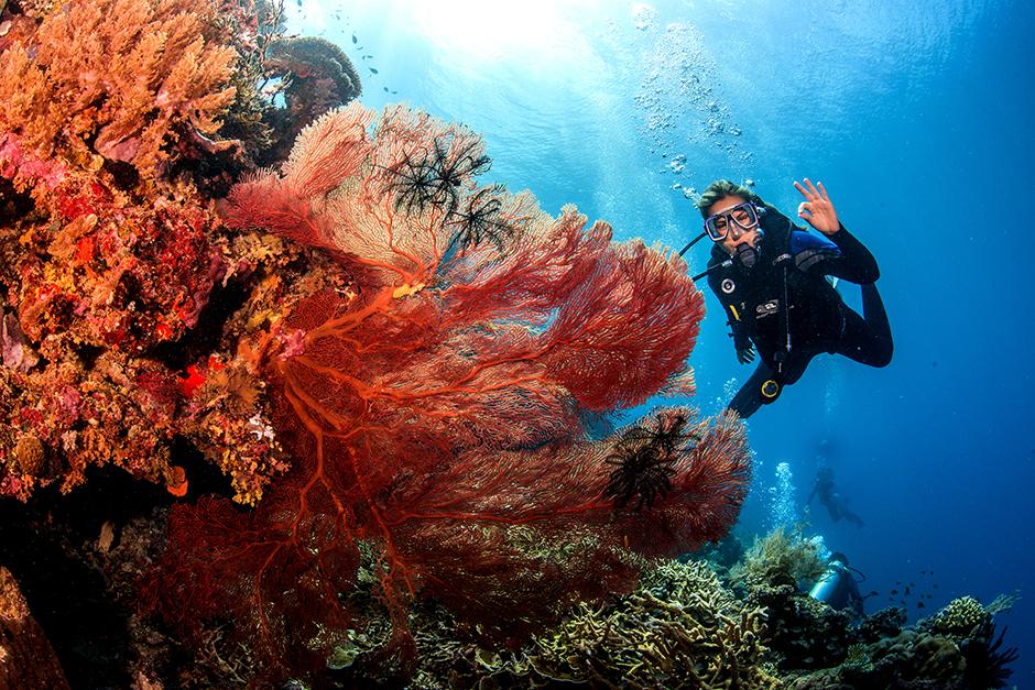 SCUBA Diving Conflict Islands Tour