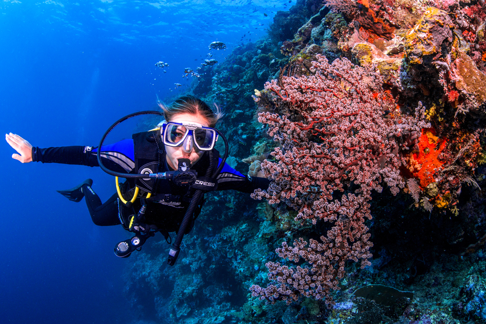 Coral Garden Diver with Soft Coral