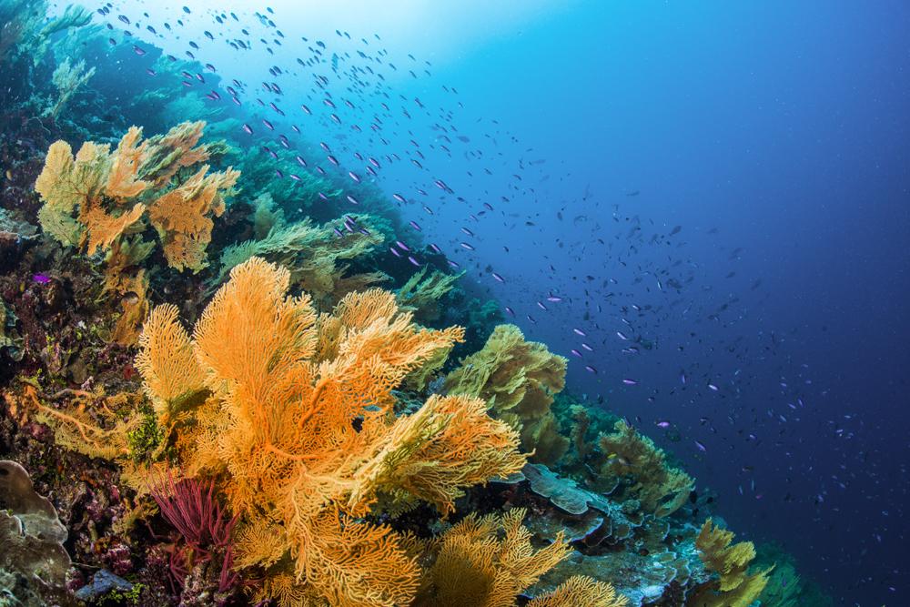 Lunn Island Reefs
