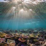 Panasesa Sanspit Corals